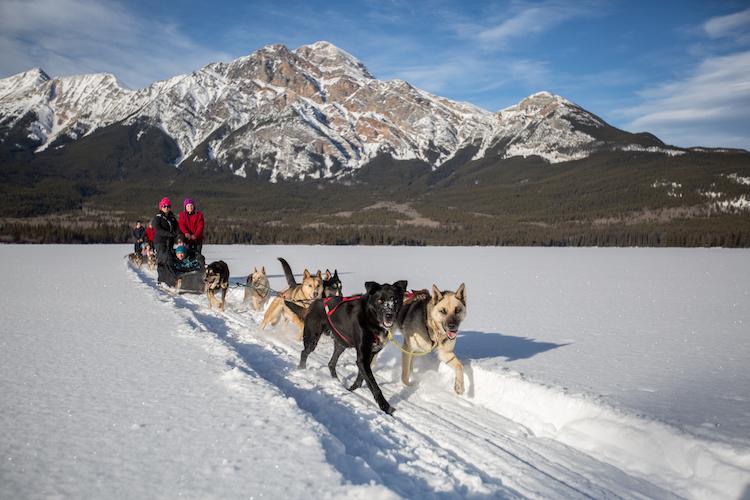 People Dogsledding at Winterfest