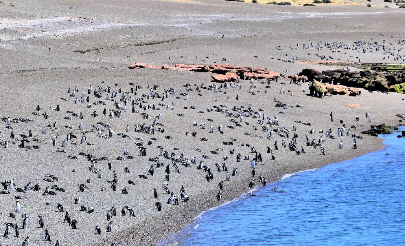 Península Valdés, penguins in Punta Tombo