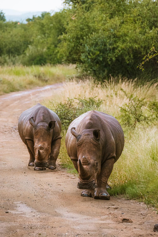 Pilanesberg National Park safari