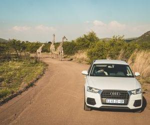 Pilanesberg Zuid Afrika zelf rijden
