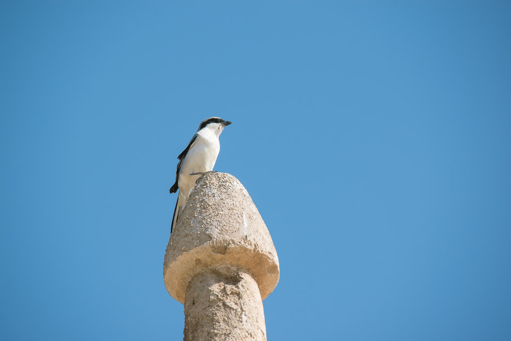 Qatar vakantie Al Zubara Fort