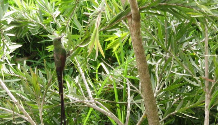 Quilotoa loop ecuador kolibries
