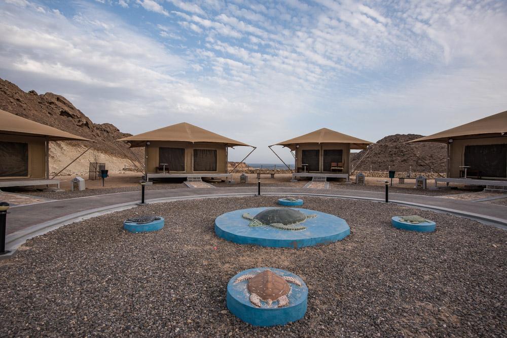Ras Al Jinz Turtle Reserve Oman schildpadden spottne