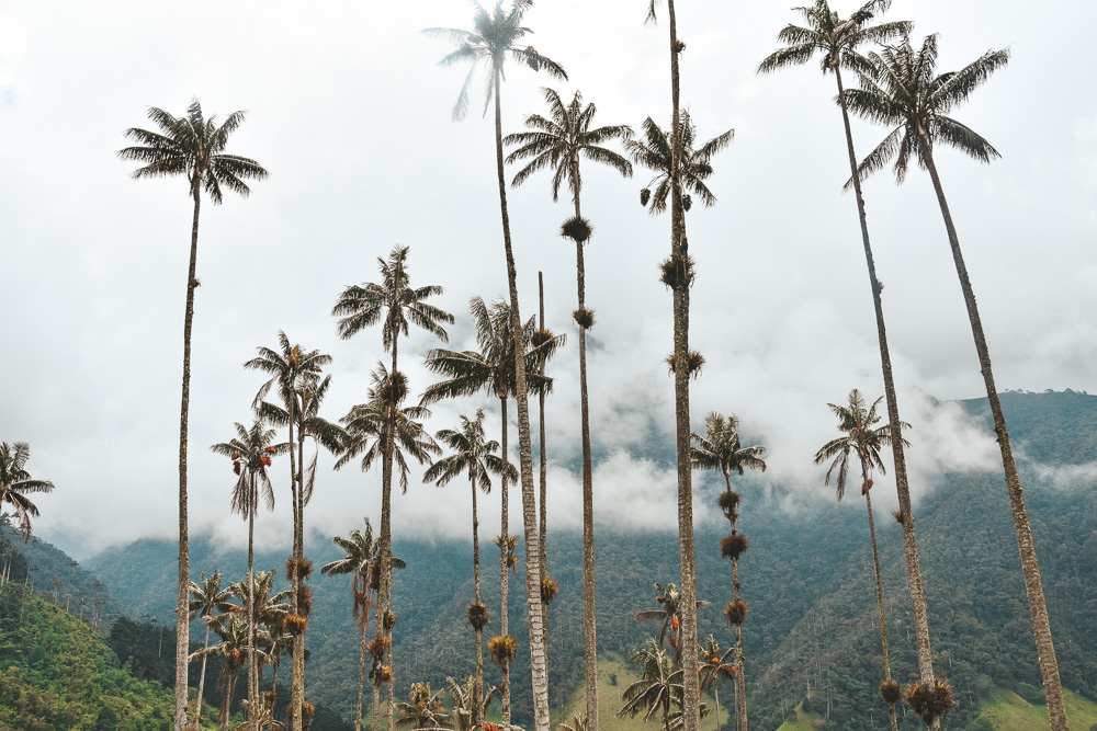 Reisroute Colombia Valle de Cocora-2