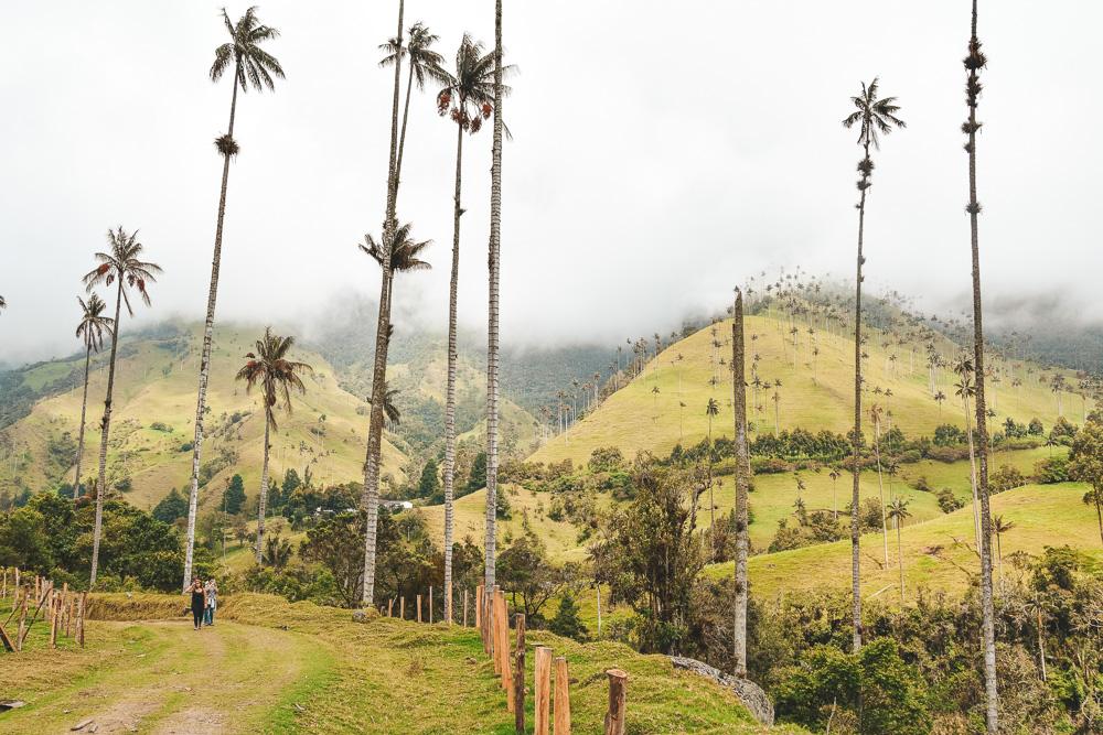 Reisroute Colombia Valle de Cocora