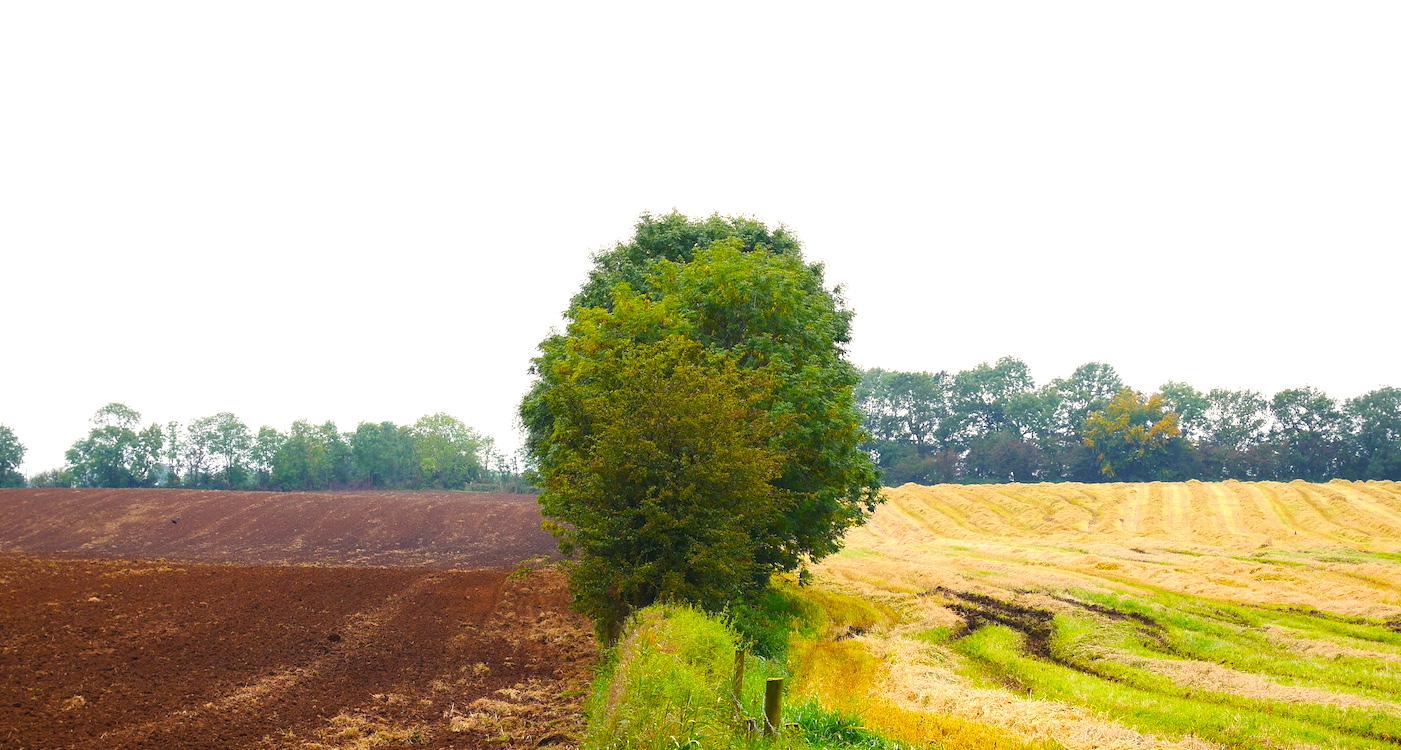 Reisverzekering gras groener aan de andere kant
