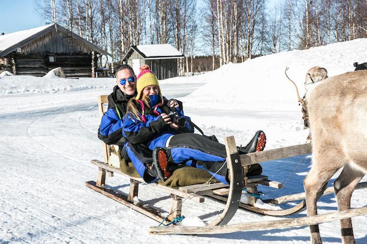 Rendier slee lapland finland