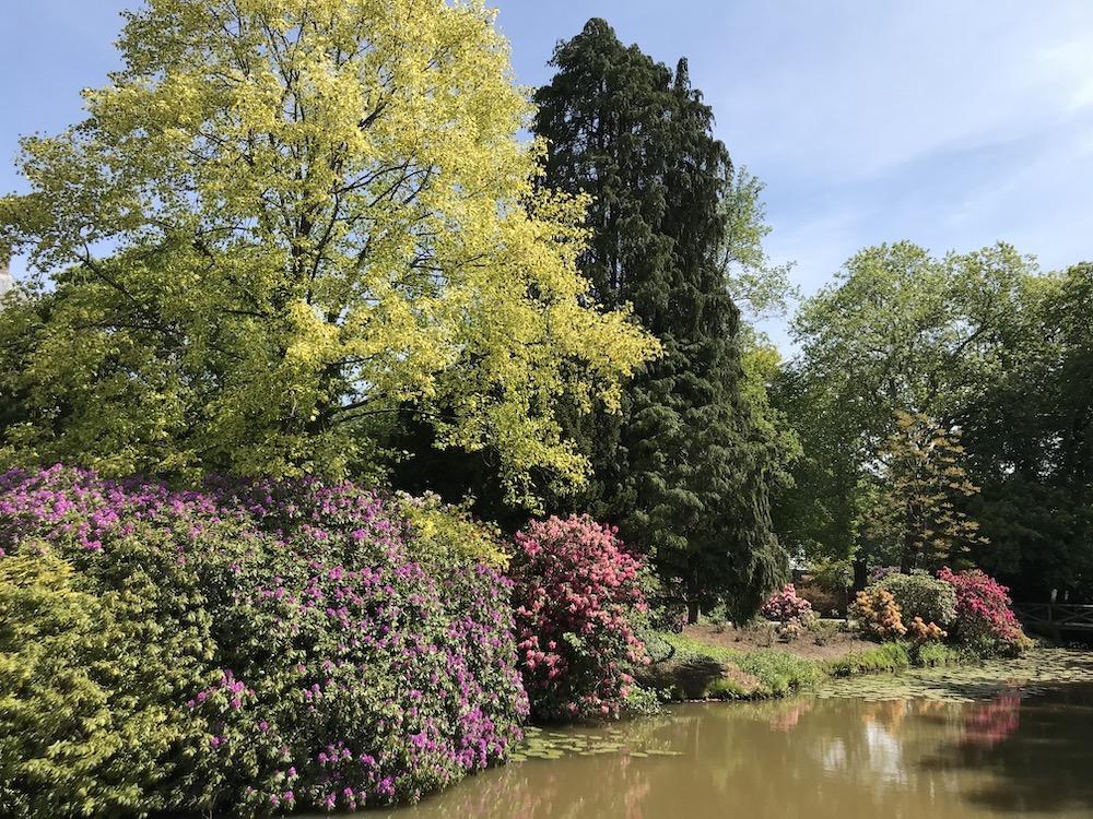 Rhododendrontuin mooiste plekken in nederland top 10