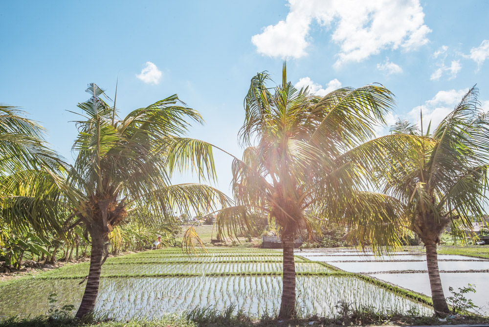 Rijstvelden Bali tips