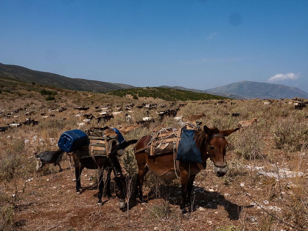 Roadtrip Albanie Tips voor Orikum