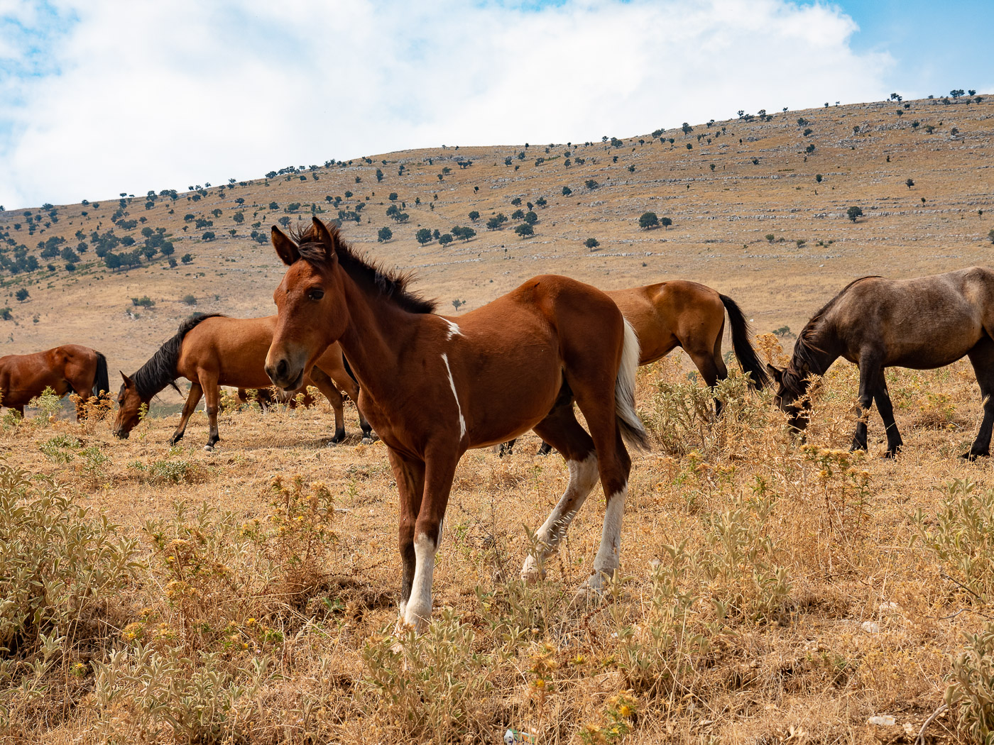 Roadtrip Albanie tips wilde paarden