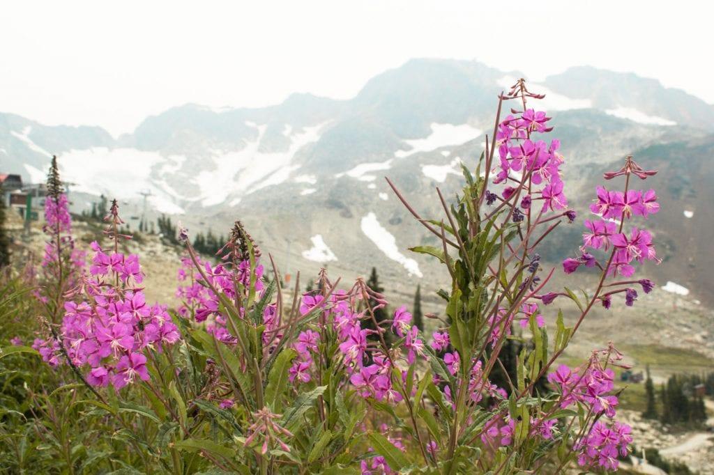 Roadtrip West Canada Whistler