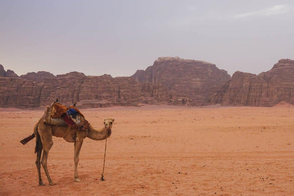 Roadtrip israel jordanie-3