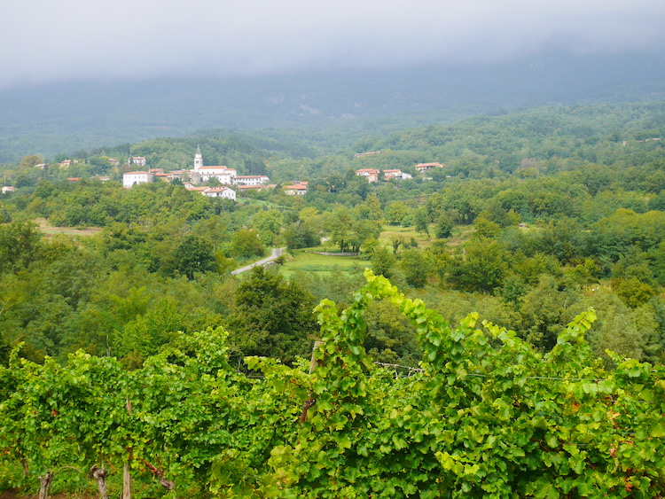 Roadtrip slovenie wijngaarden