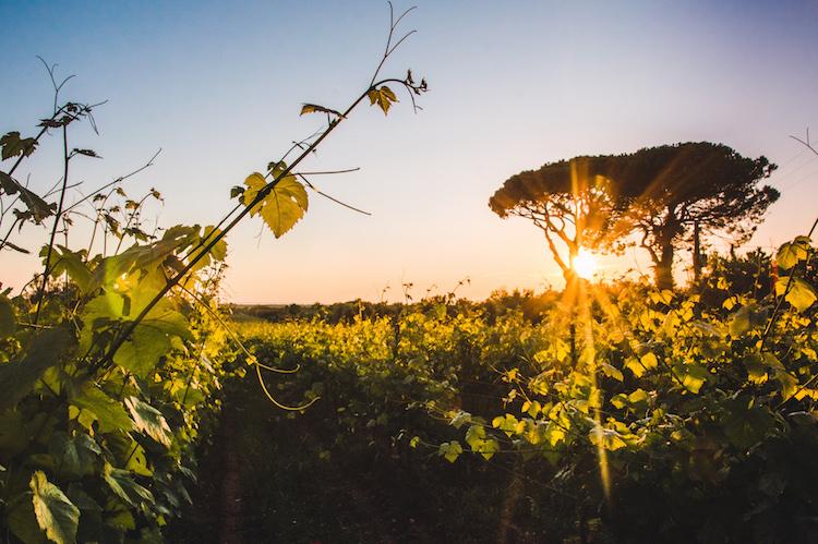 Roadtrip toscane Etruskische Kust wijngaarden