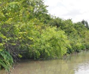 Rondreis Florida Everglades