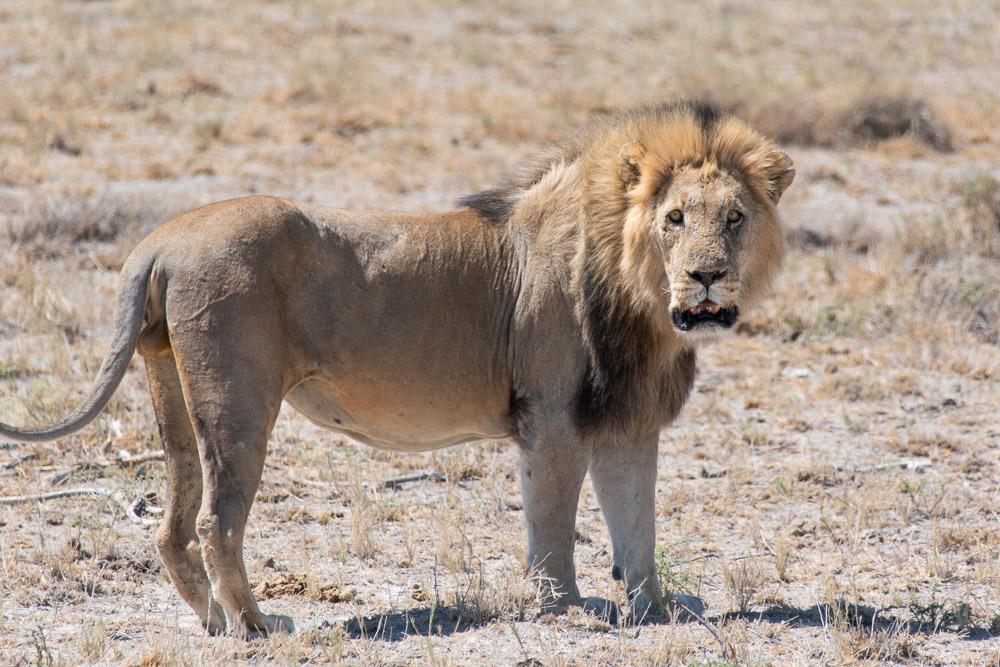 Rondreis Namibie Etosha National Park route