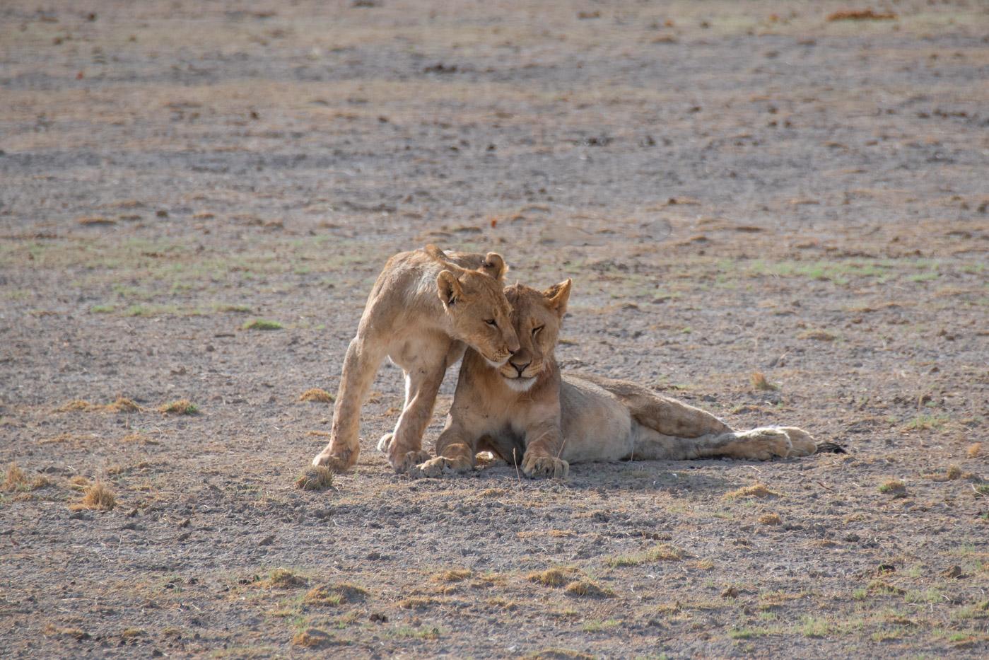 Rondreis Namibie route Etosha National Park