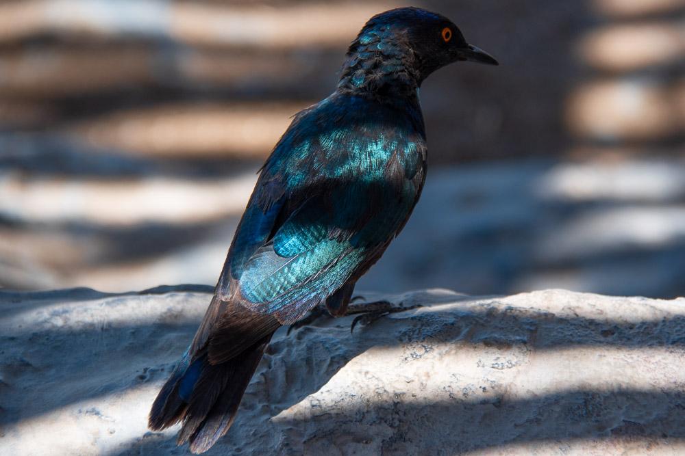 Rondreis Namibie route dieren