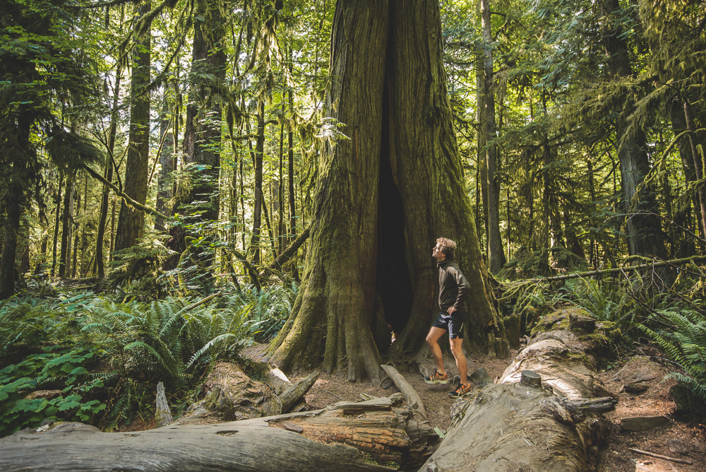 Rondreis Vancouver Island cathedral grove