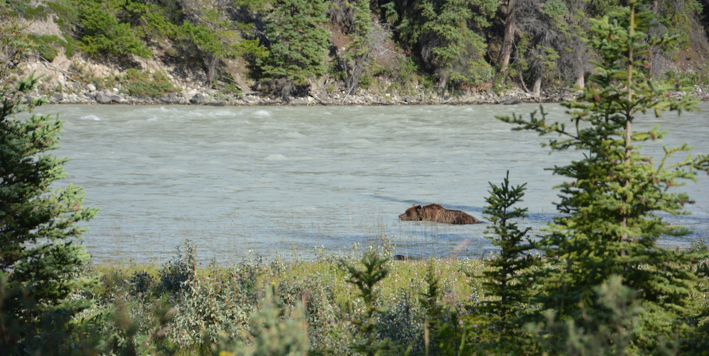 Rondreis route west canada beren