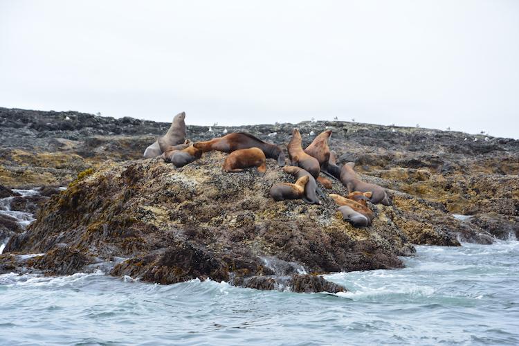 Rondreis west canada wildlife kust