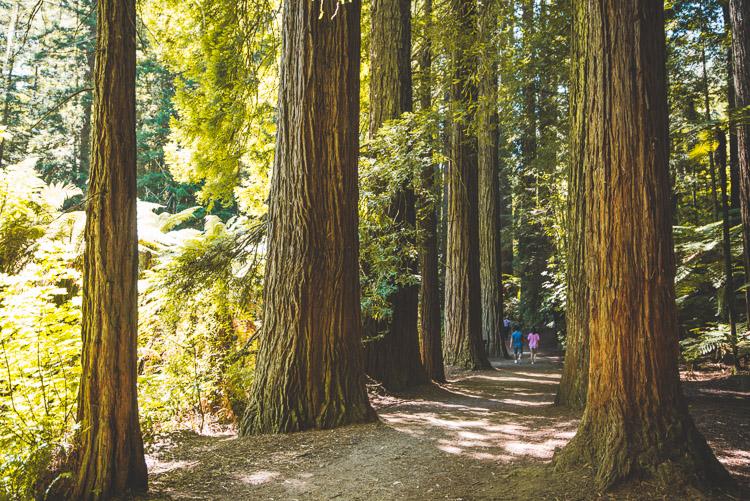 Rotorua The Redwoods