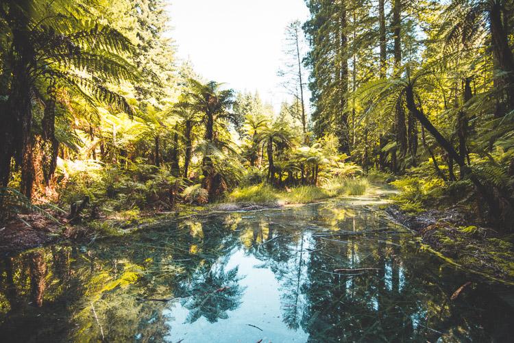Rotorua The Redwoods poel nieuw zeeland_