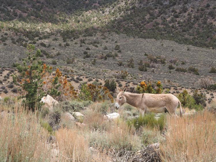 Route door Death valley tips Stove Pipe Wells general store tips ezels