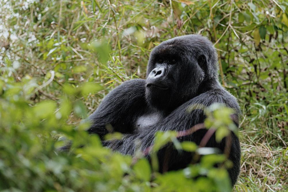 Rwanda gorilla reizen