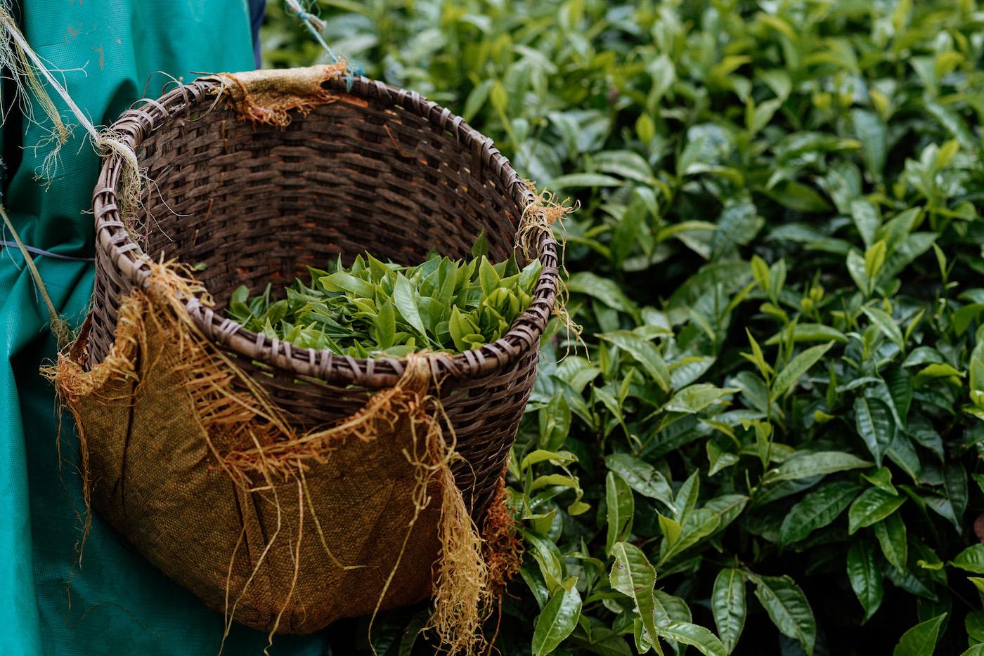 Rwanda plantage thee