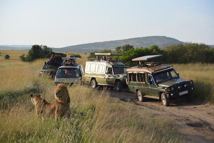 safari-suzanne-artikel255