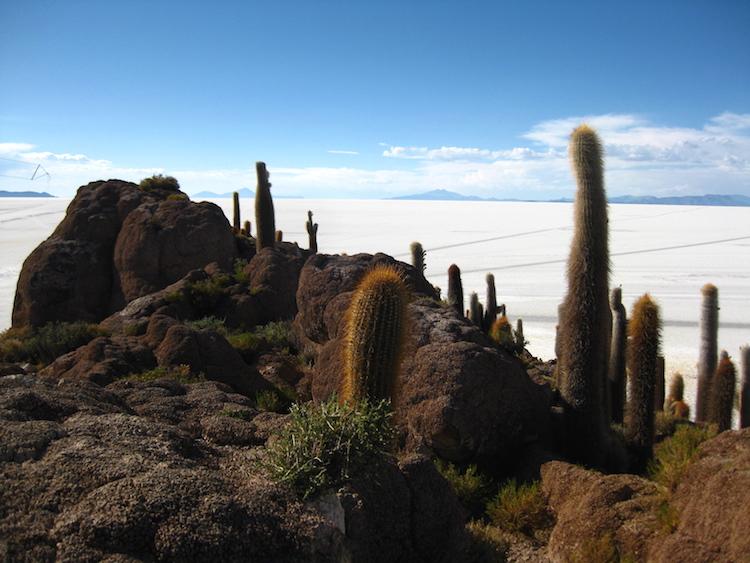 Salar de Uyuni 2 cactussen Iris Timmermans