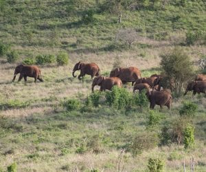 Salt-Lick-Lodge-Taita-Hills-in-Kenia-olifanten
