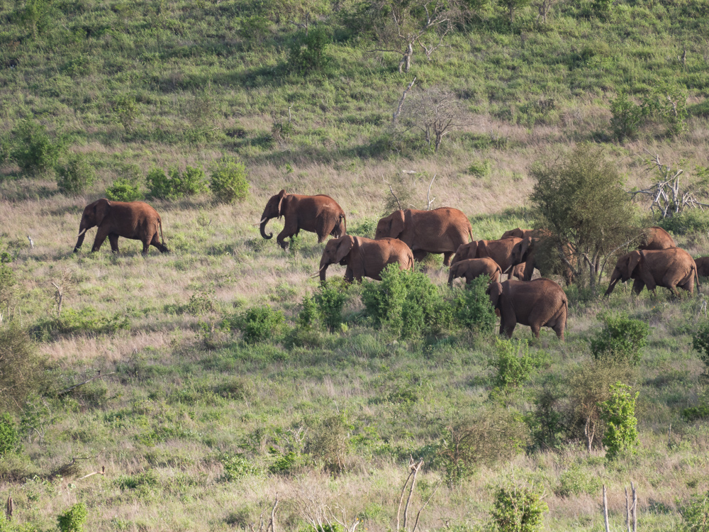 Salt-Lick-Lodge-Taita-Hills-in-Kenia-olifanten