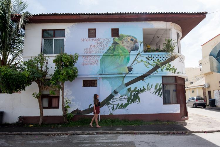 San Nicolas Aruba Street art pappegaai