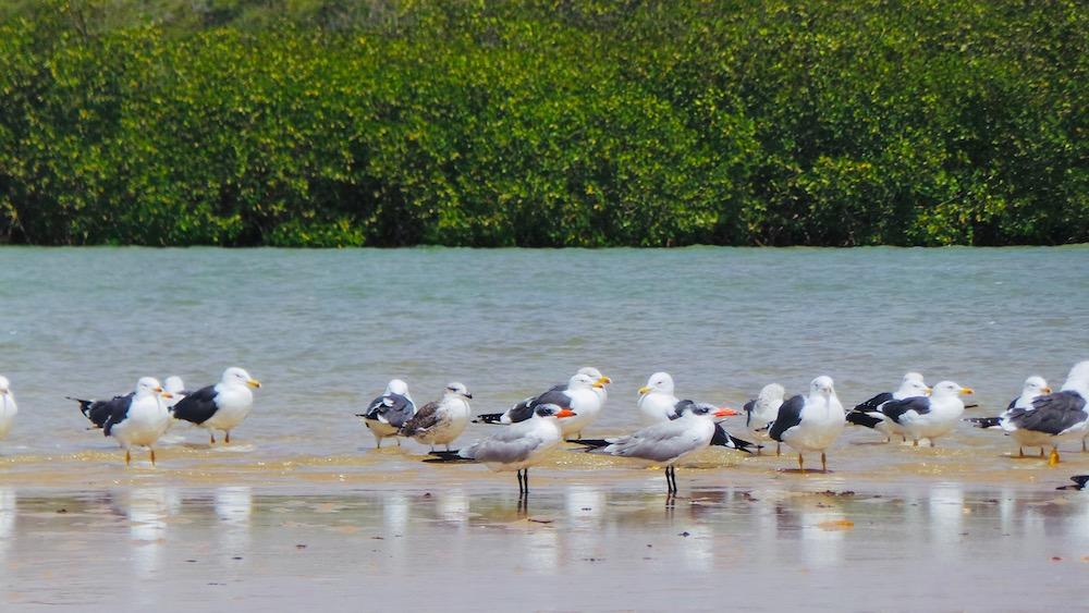 Senegal Vakantie Lagune Somone
