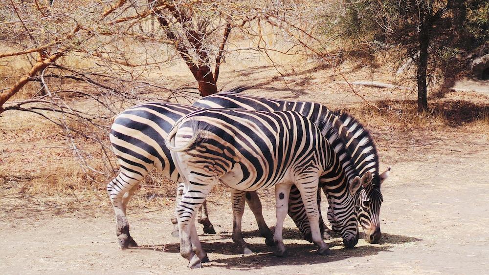 Senegal vakantie safari Bandia