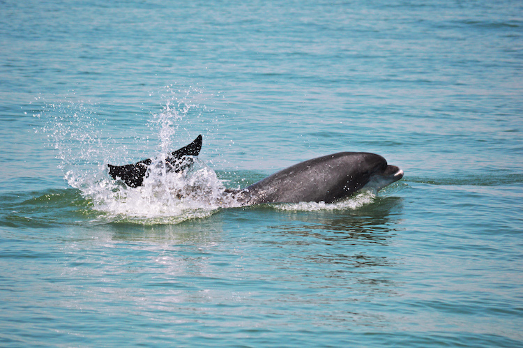 Setubal sado Dolfijnen portugal
