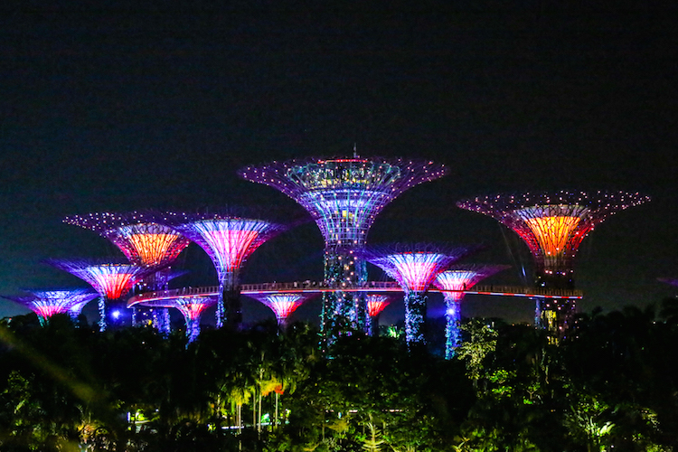 Singapore trees At night