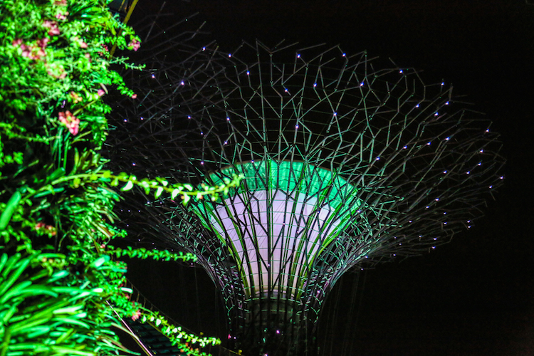 Singapore trees night gardens by the bay show