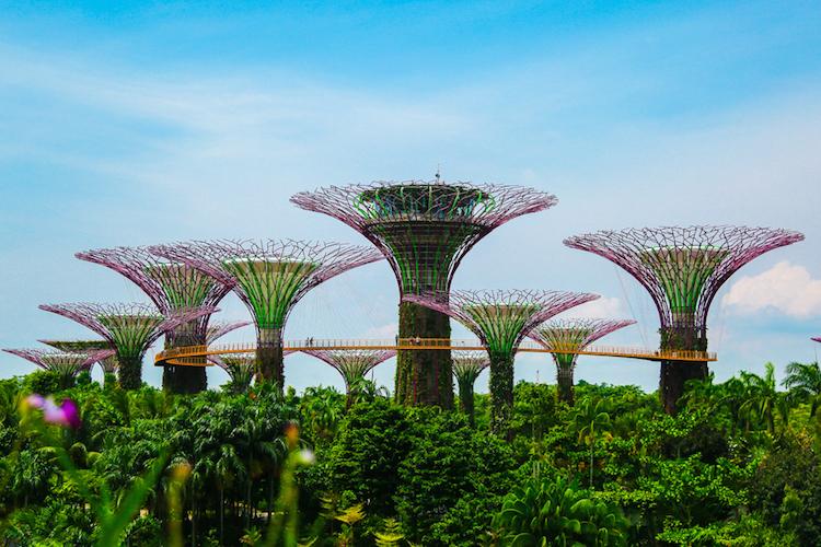Singapore trees overdag