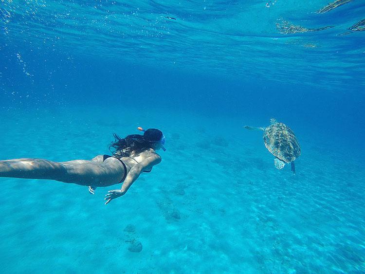 Snorkelen Curacao Playa Grandi schildpadden