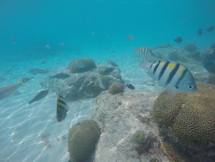snorkelen curacao porto marie