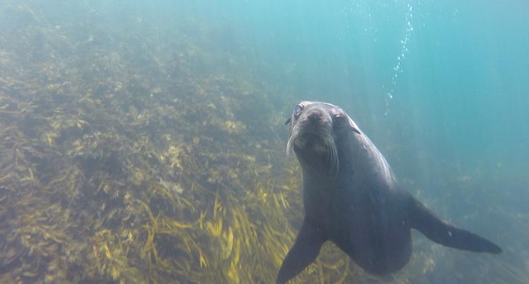 Snorkelen nieuw zeeland tips