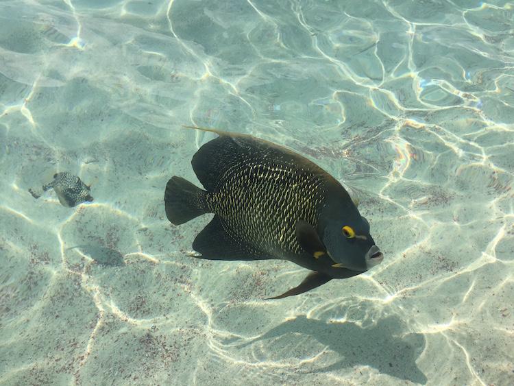 Snorkelen op Bonaire Wayaka