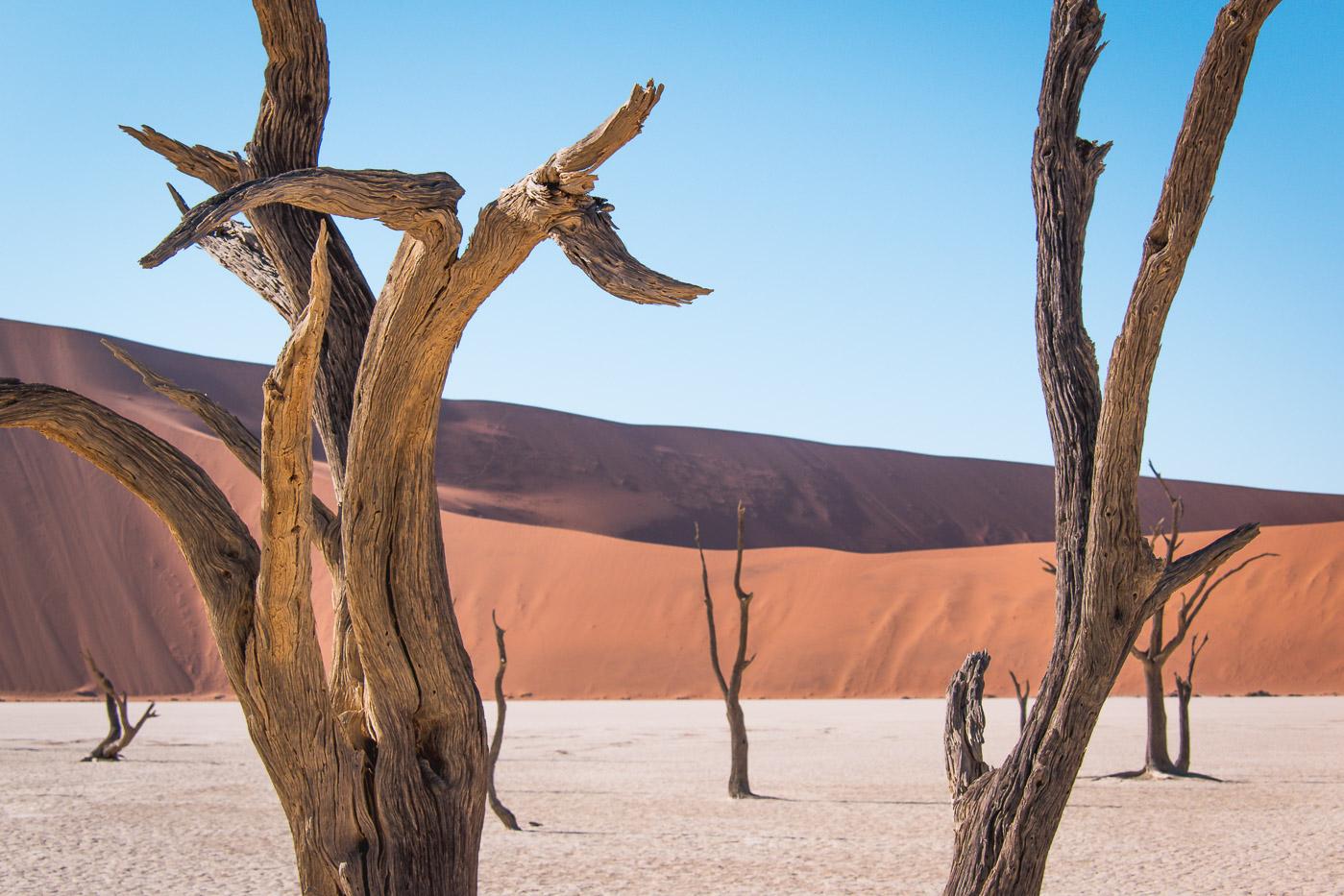 Sossusvlei Deadvlei namibie bomen