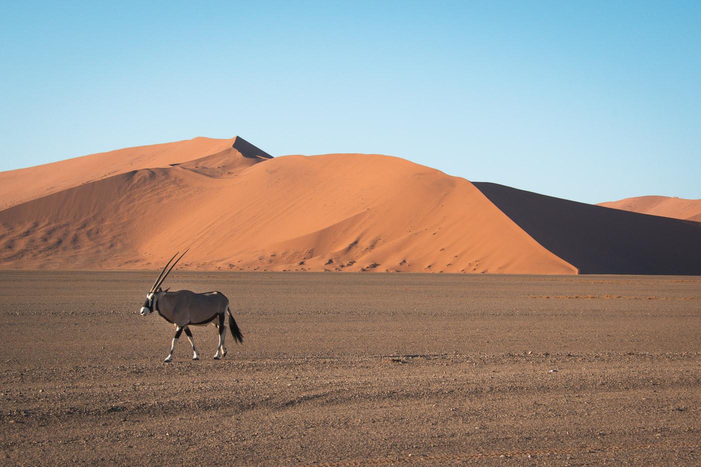 Sossusvlei Namibie tips