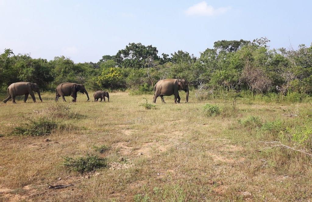 Sri Lanka off the beaten track Kataragama - Yala NP