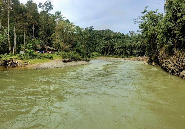 Sumatra Jungle Batu Rongring
